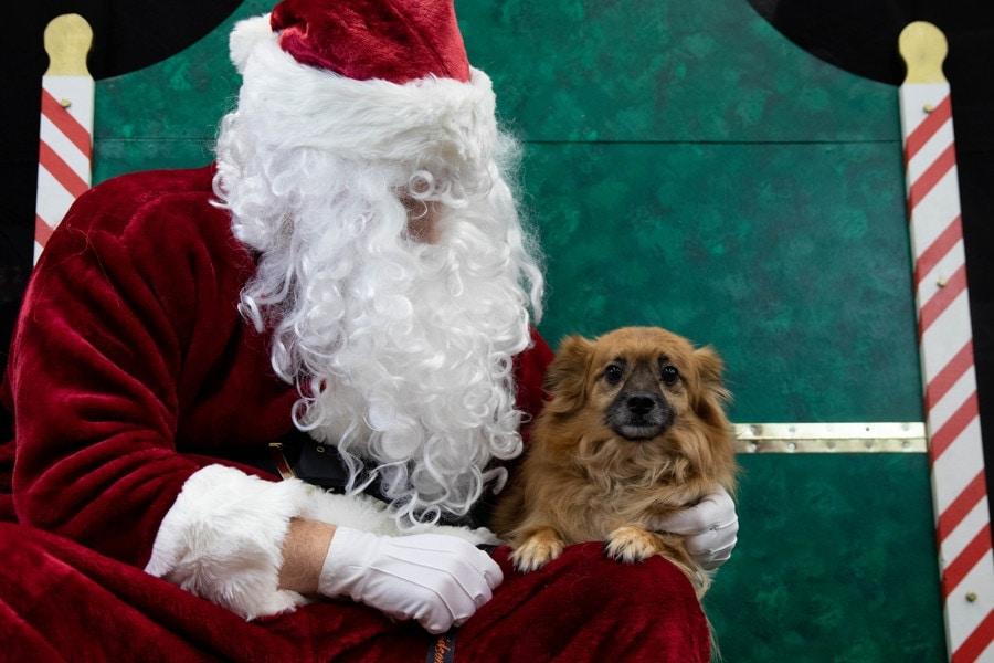 Santa Photos-090